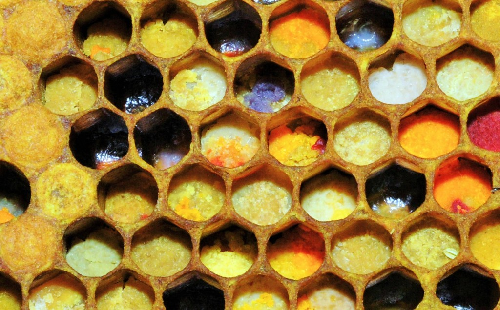 Réserves de pollen multicolore dans la ruche