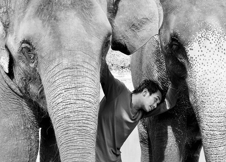 Cornac et ses éléphants