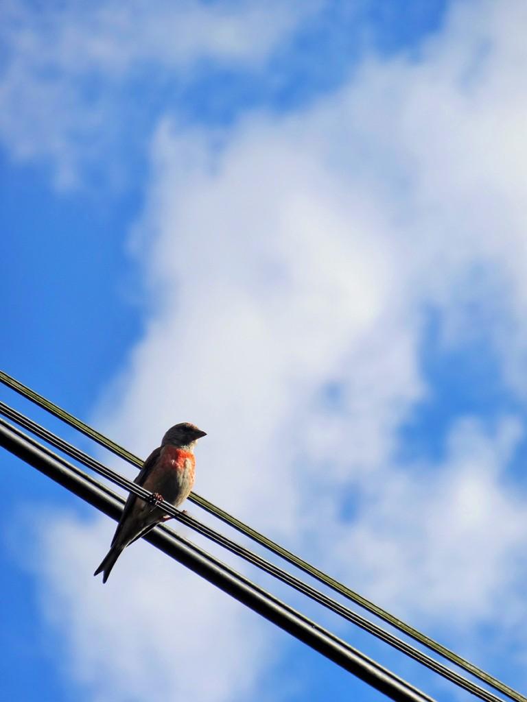 Comme un oiseau sur un fil