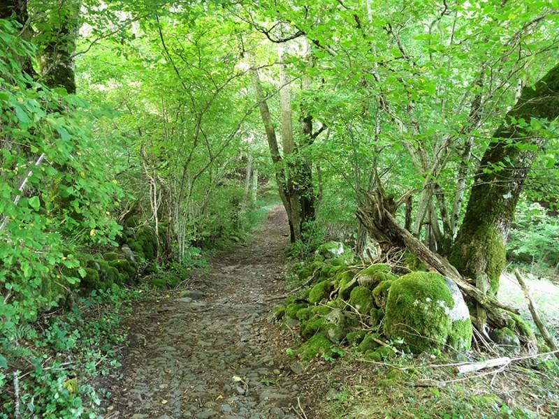La traversée de la Lozère, en route pour Compostelle