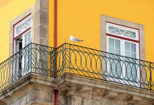 Mouette au balcon
