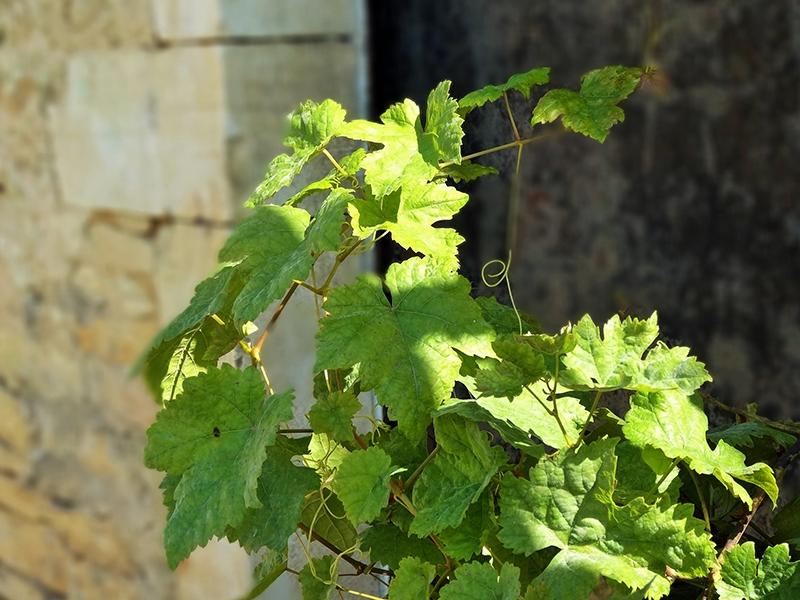 Qu'est-ce qu'un vin Grand cru?