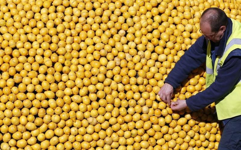 Menton : la Fête du citron