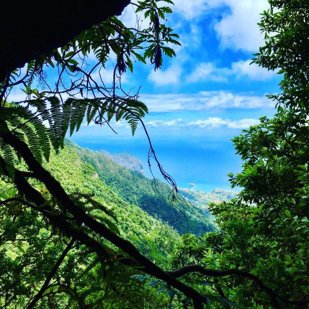 Forêt Laurosliva