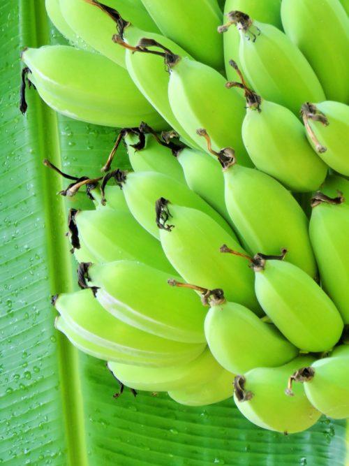 Régime de bananes vertes